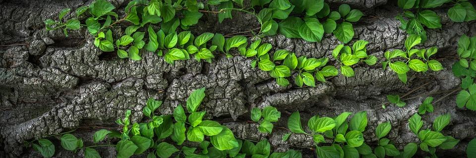 Cómo diferenciar la madera ecológica