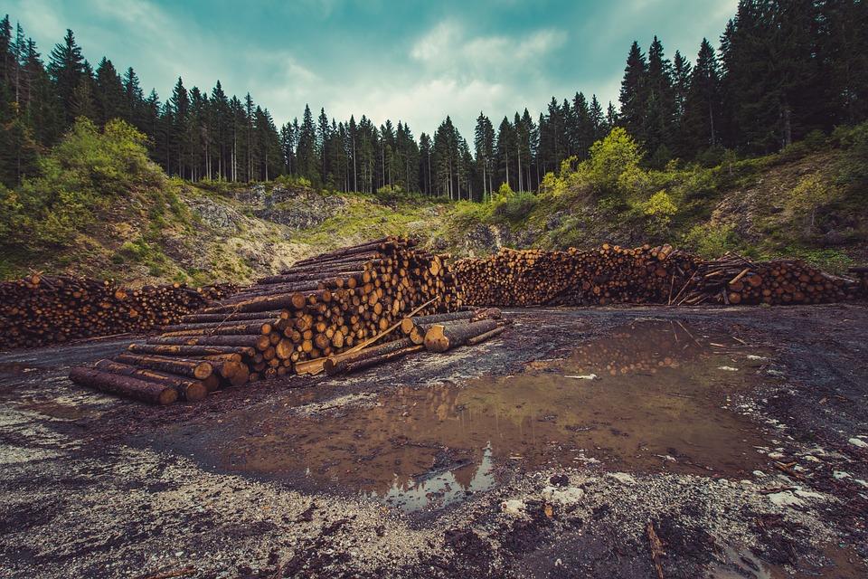 La importancia de la madera certificada